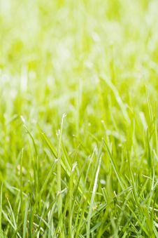 Free Grass Background Royalty Free Stock Photos - 13900798