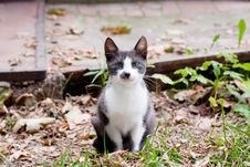 Free Cat Sitting On The Grass Royalty Free Stock Photography - 13902707