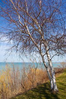 Free Lake Tree Stock Photo - 13902780