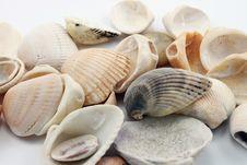 Free Shells Royalty Free Stock Photo - 13903005