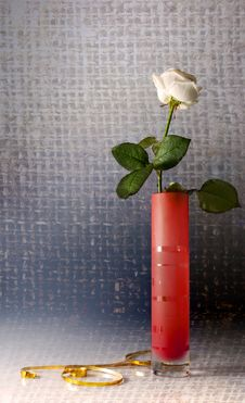 Free Still Life With One White Rose Stock Photography - 13903932