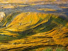 Free Surreal Algae Royalty Free Stock Images - 13905559