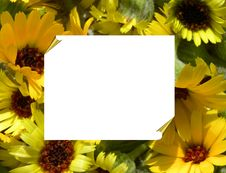 Free Frame With Sunflowers Royalty Free Stock Images - 13906459