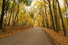 Free Golden Autumn Drive Royalty Free Stock Photography - 13907117