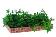 Free Parsley Stock Photo - 13907540