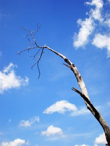 Free Tree Branch In The Sky Stock Photos - 13907713