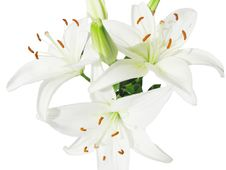 Free Bouquet Of White Lilies Stock Images - 13908764