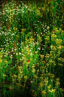 Free Wonderful Green Meadow. Stock Images - 13909204