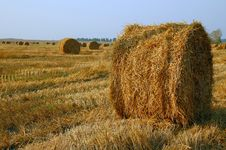 Free Haymaking At The End Of Summer Royalty Free Stock Images - 13909539