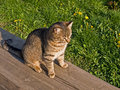 Free Tabby Cat Stock Photos - 13916093