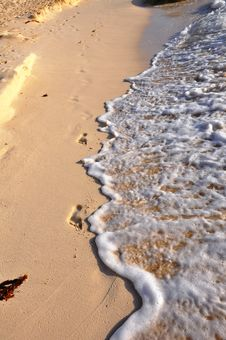 Free Traces On Sand. Stock Photography - 13911202