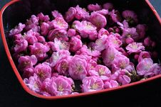 Free Flower Diet Stock Photo - 13911480