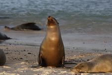 Free Sea Lion Stock Images - 13912324