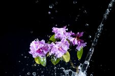 Free Flower With Water Stock Image - 13912661