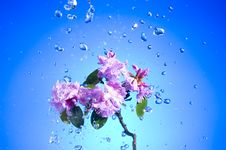 Free Blossom Pink Flower Stock Images - 13912674