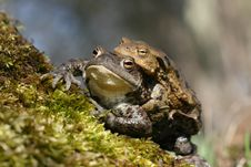 Free Toad Attachment Stock Photo - 13913420