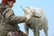 Boy Feeding The Goat Stock Image