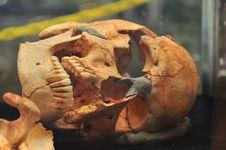 Free Skeleton Royalty Free Stock Photo - 13914795