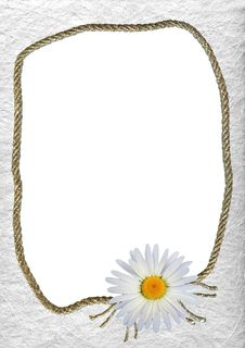 Free White Frame Vith A Flower Royalty Free Stock Image - 13914856