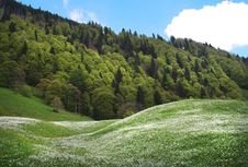 Free Spring On The Alpine Hill Royalty Free Stock Photography - 13917627