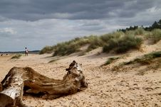 Free Driftwood On The Beach Stock Image - 13917941