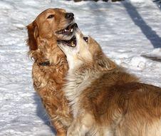 Free Dog Stock Photography - 13921572