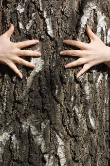 Hands Clasp A Tree Trunk