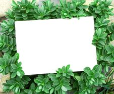 Free Card Blank Stock Images - 13922154