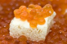 Free Small Sandwich With A Butter And Caviar Royalty Free Stock Image - 13922306