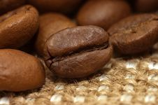 Free Coffee Bean On Sacking Royalty Free Stock Photo - 13922395