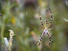 Free Spider Stock Photos - 13922413