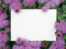 Free Card Blank Royalty Free Stock Photo - 13922445