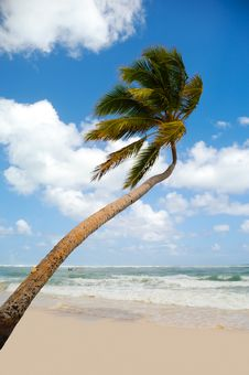 Free Palm On Exotic Beach Stock Photo - 13923390