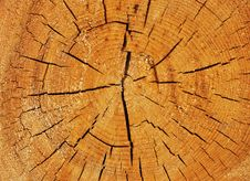 Free Cross Section Of Big Tree Trunk Stock Images - 13924114