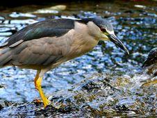 Free Bird And Water Stock Photo - 13925220