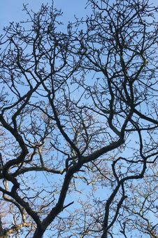 Free Texture Of Tree Branches Royalty Free Stock Photos - 13925588