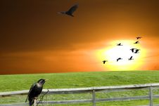 Free Sunset Birds Stock Photography - 13925852