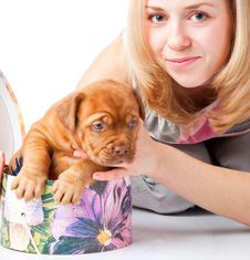 Free Puppy Of Dogue De Bordeaux (French Mastiff) Stock Image - 13927851
