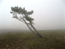 Free Mountain Tree In Fog Stock Images - 13928024