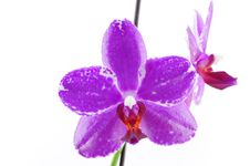 Free Single Purple Orchid With White Pattern Stock Image - 13928071
