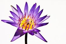 Free Lotus Royalty Free Stock Image - 13928166