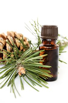 Free Bottle Of Fir Tree Oil Stock Photo - 13929180