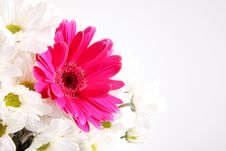 Free Flowers Royalty Free Stock Photography - 13929367