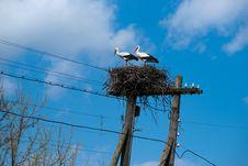 Stork S Nest Stock Photo