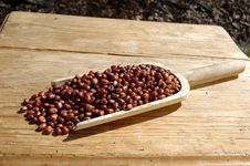 Free Bean Stock Images - 13929474