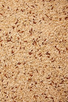 Free Rice Grain Stock Photography - 13929582