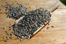 Free Sunflower Seeds Stock Image - 13929591