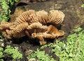 Free Mushroom Royalty Free Stock Photo - 13935085