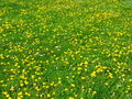 Free Spring Meadow Stock Photos - 13937763