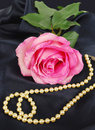 Free Shining Pink Rose With Pearls Royalty Free Stock Photography - 13939027